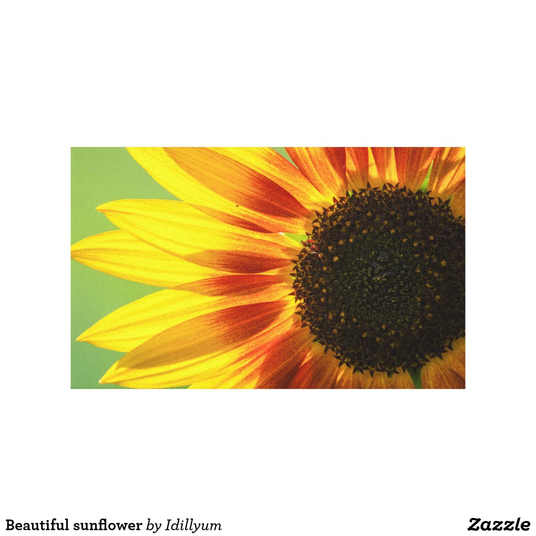 Beautiful sunflower Canvas Print