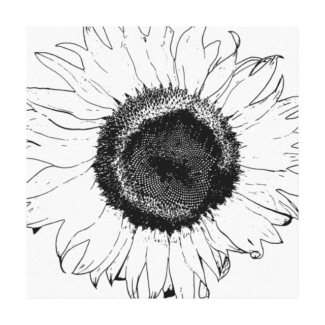Black and White Sunflower Canvas Print