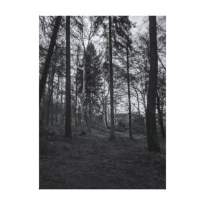 Black and white woods canvas print