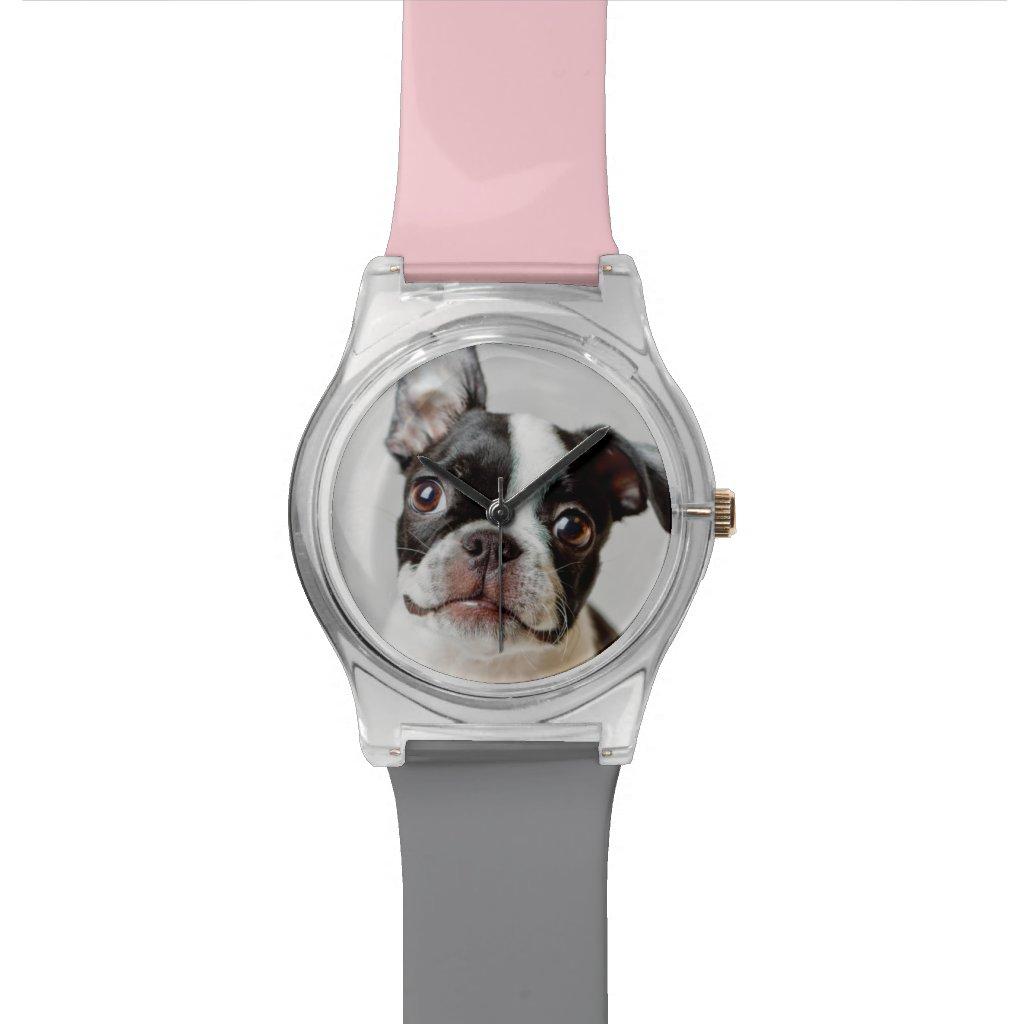 Boston Terrier Watch