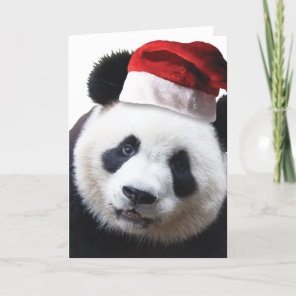 Christmas Panda Bear Holiday Card