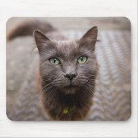 Cute cat mouse mat
