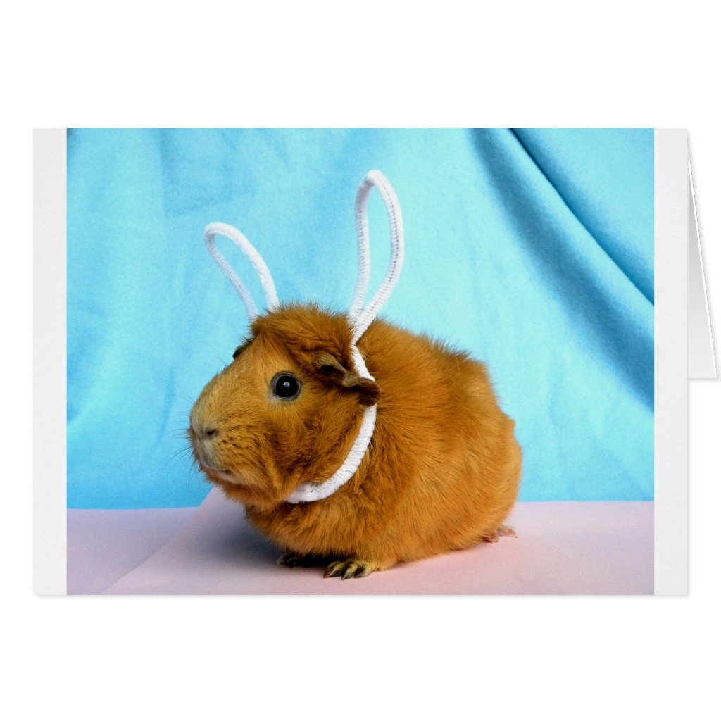 Easter Piggy Card