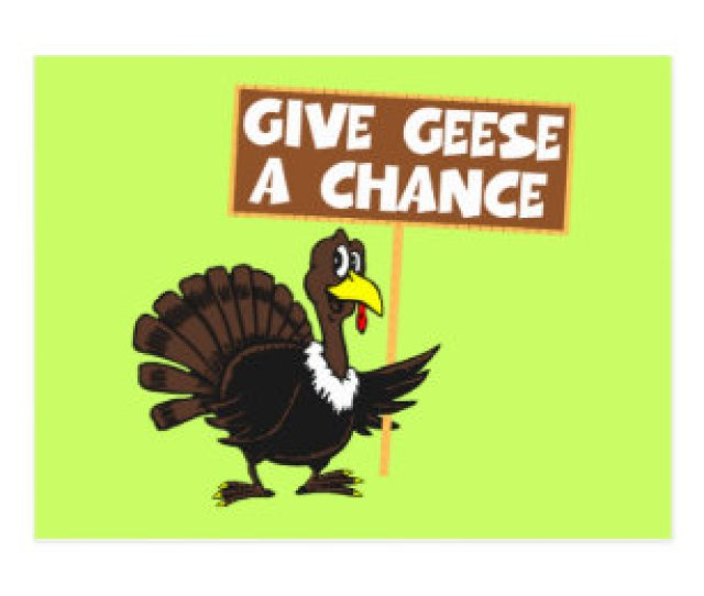Funny Turkey Spoof Peace Postcard