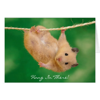 Hamster Gifts TShirts Art Posters Other Gift Ideas