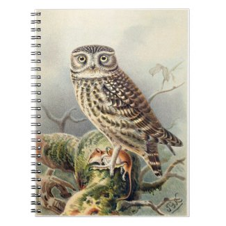 Little Owl Notebook