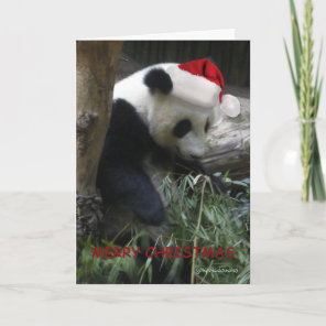Merry Christmas Panda Happy New Year! Holiday Card