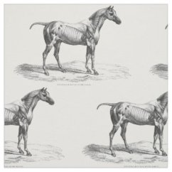 Horse Anatomy Diagram Muscles Wiring Diagrams Give Information About Gifts Gift Ideas Zazzle Uk Retro Muscle Picture Textile Fabric