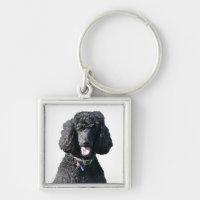 Standard Poodle dog black beautiful photo portrait Keychain