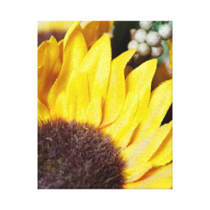 Sunflower Stretched Canvas Print #1