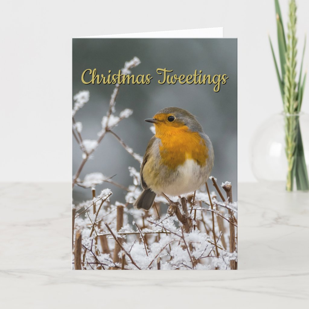 Winter Robin White Christmas Holiday Card