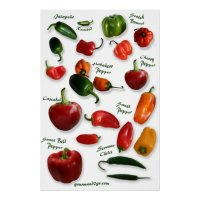 Chilli Varieties Wall Art | Zazzle.com.au