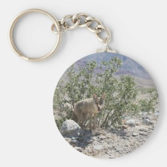 Coyote in Death Valley Desert Key Chains