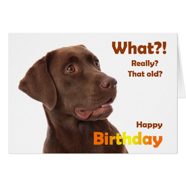 Happy Birthday Fun Card With Labrador Dog Au