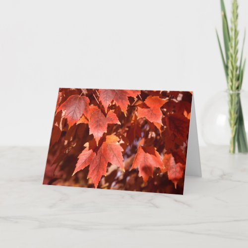 2767 Autumn Maple Leaves Sympathy Card