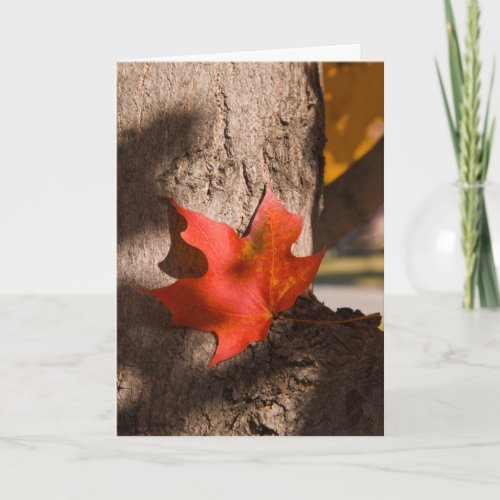 2787 Autumn Maple Leaf Sympathy Card