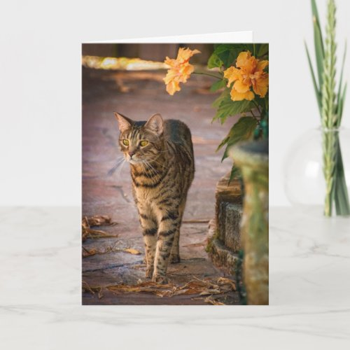 A cat and autumn leaves to celebrate Thanksgiving! Holiday Card