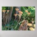 Aloe Vera Garden Print