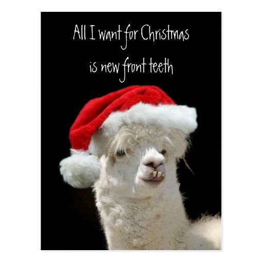 Alpaca Christmas Postcard Zazzle