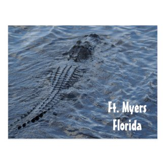 American Alligator postcard