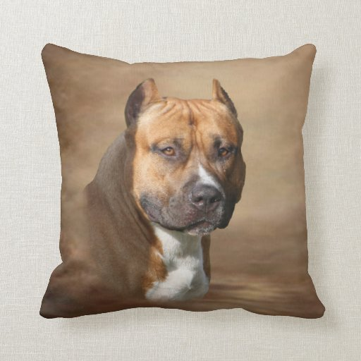 American Pit Bull Throw Pillow  Zazzle