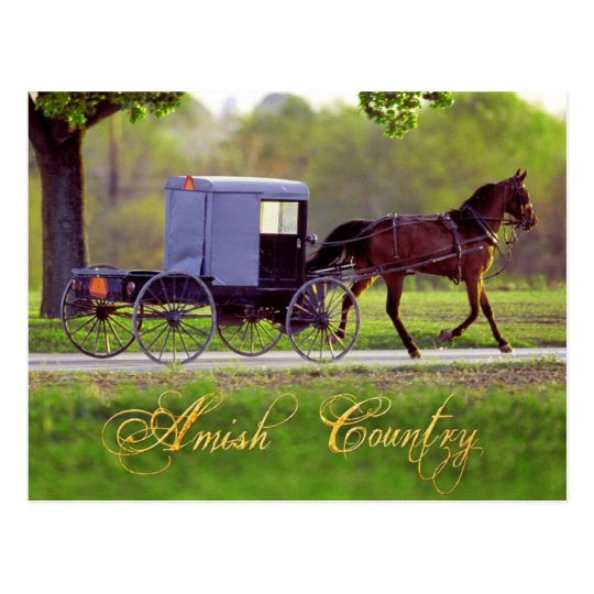 Amish Horse And Buggy Lancaster PA Postcard