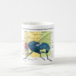 House Fly Anatomy Diagram Yamaha 703 Remote Control Wiring Home Decor Furnishings Pet Supplies Zazzle Of A Housefly Musca Domestica Coffee Mug