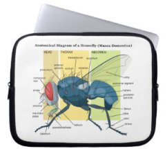 House Fly Anatomy Diagram Jewish Temple Electronics Tech Accessories Zazzle Of A Housefly Musca Domestica Computer Sleeve