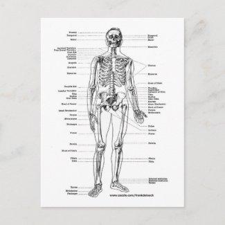 label the blank skeleton quiz
