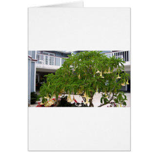 Angel's Trumpet in California Card