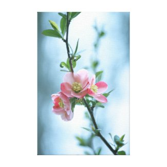 Apple Blossom #P0365 Canvas Canvas Print