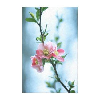 Apple Blossom #P0365 Canvas Canvas Print