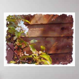 Apple Blossom print
