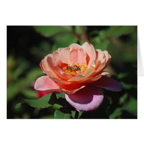 Apricot and Lavender Rose with Honeybee Card card