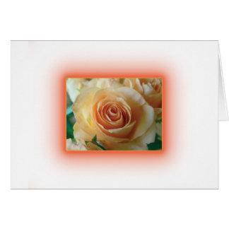 Apricot Rose Blur Cards