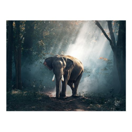Asian Elephant in a Sunlit Forest Clearing Postcard
