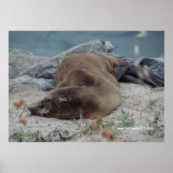 Asleep on the Rocks zazzle_print