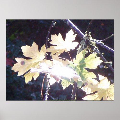 Autumn Sun Rays #39 print