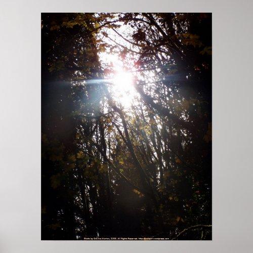 Autumn Sun Rays # 42 print