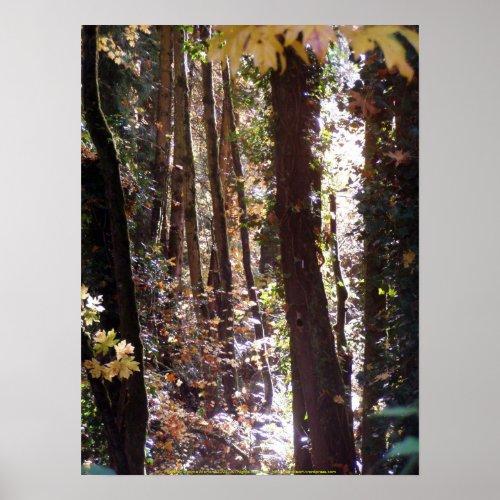 Autumn Sun Rays #4 print