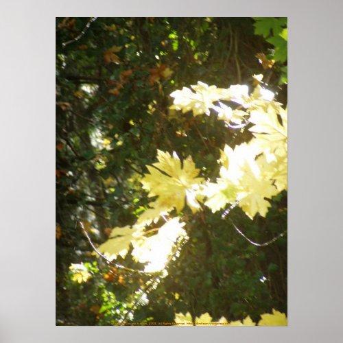 Autumn Sun Rays #8 print