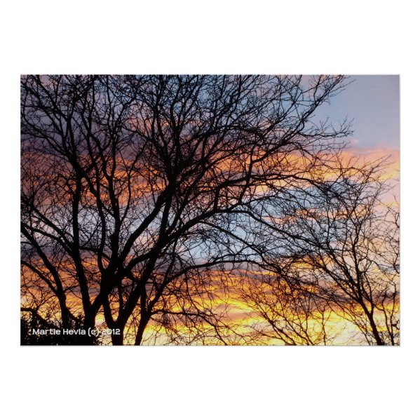 Bare Trees at Sunset Posters