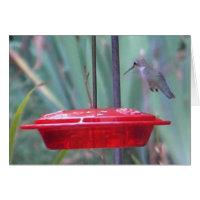 BD- Humming bird 'get well' card