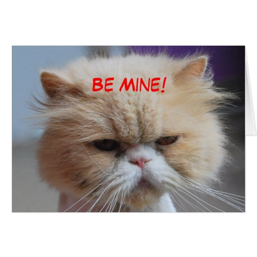 Be Mine Persian Cat card