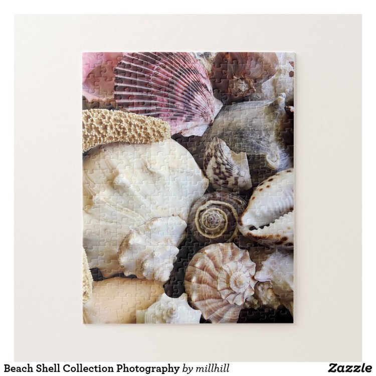 Beach Shell Collection Photography Jigsaw Puzzle