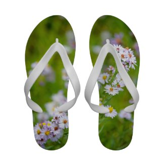 Beauty Line Sandals