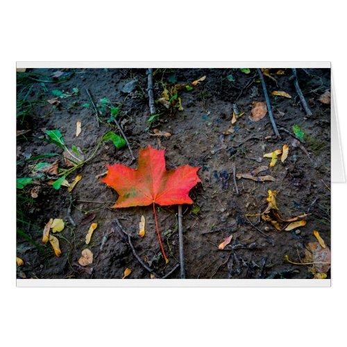 Big Red Maple Leaf