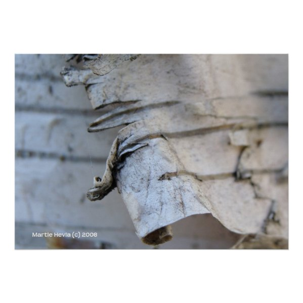 Birch Bark print