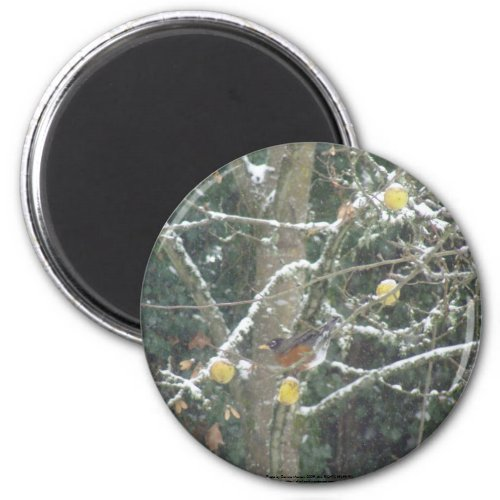 bird in a winter tree magnet