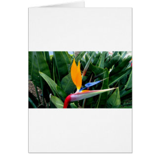 Bird Of Paradise Flower - California Greeting Card